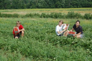 Strawberry picking at Kelder Farm, Accord, NY
